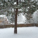Snowy backyard in Truckee